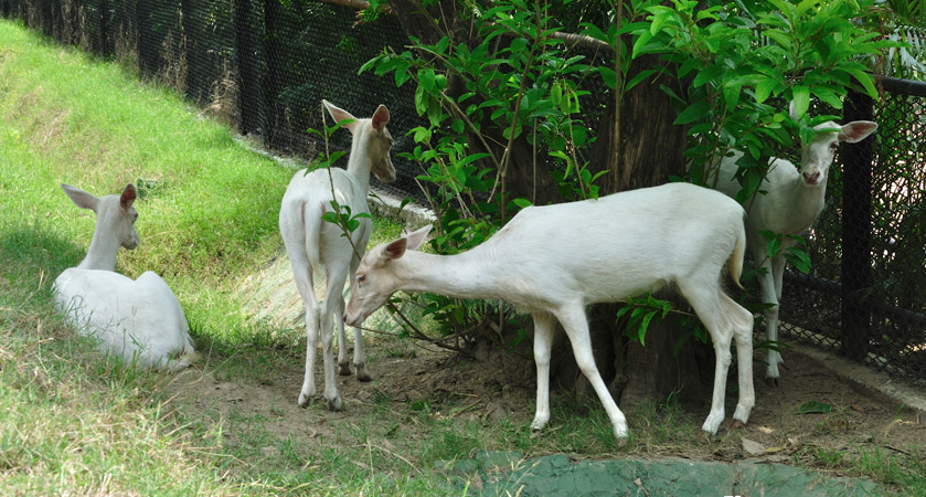 Alipore-Zoo-kolkata